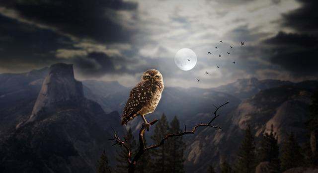 owl-2320703_960_720