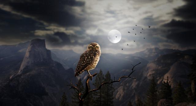 owl-2320703_1280