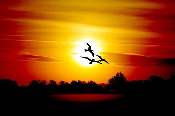 sunrise-1014467_960_720