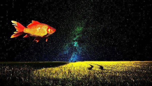 goldfish-1229772__340