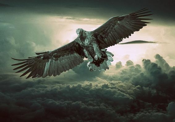 eagle-2044134_960_720