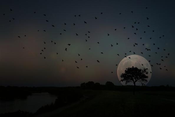 full-moon-3779078_960_720