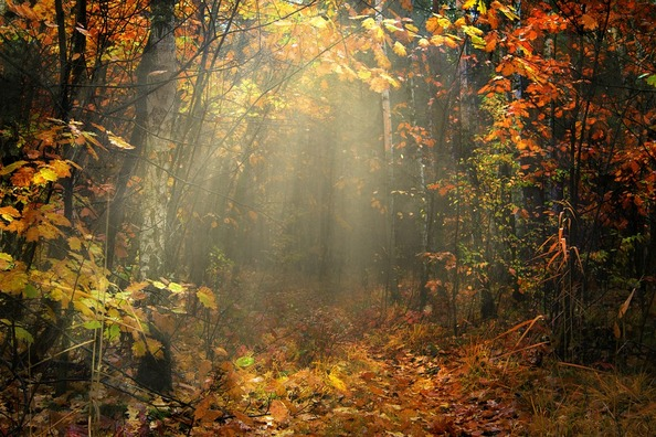 autumn-3359900_960_720