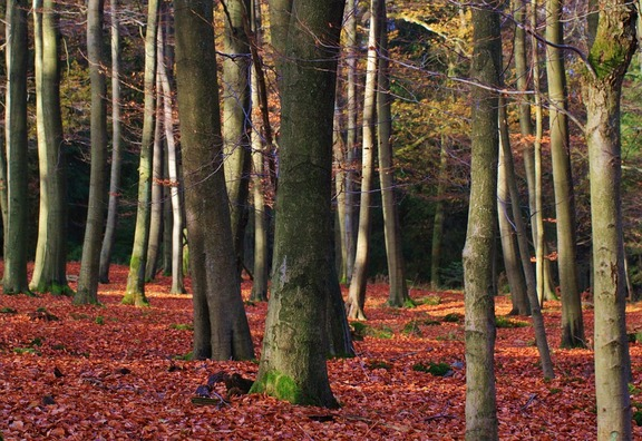 forest-402225_960_720