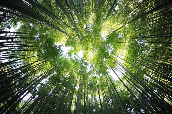 trees-918672_960_720