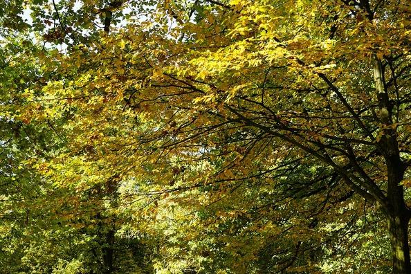 trees-3747448_960_720