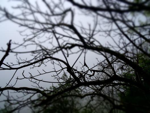 tree-952109_960_720