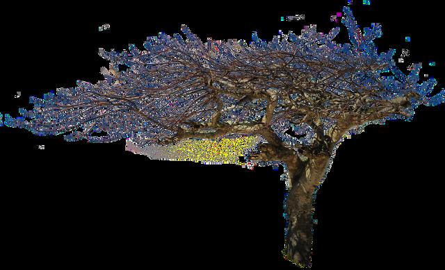 isolated-tree-2130734_960_720