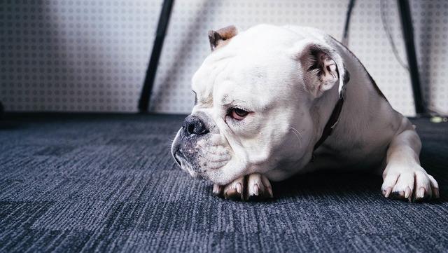 dog-1246029_960_720