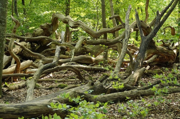 forest-905613_960_720