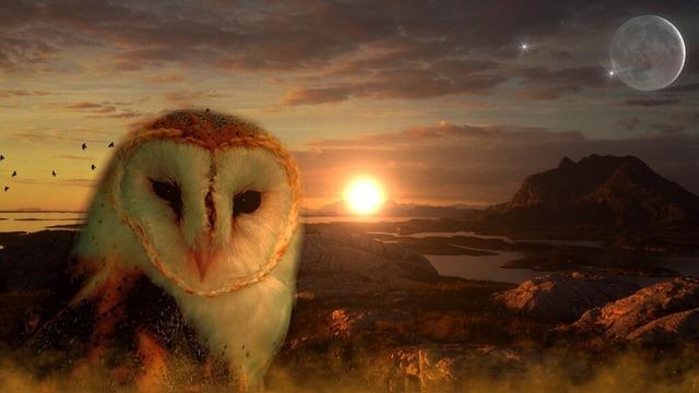 owl-711601_960_720
