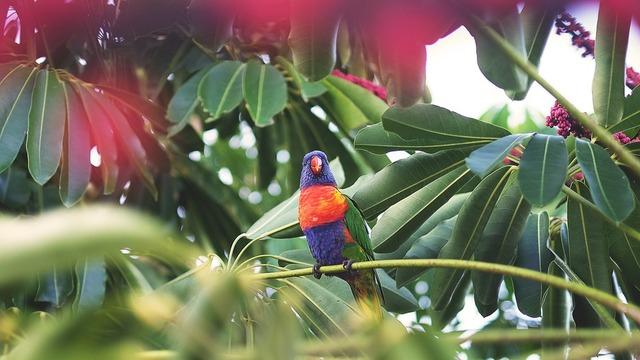 parrot-1246688_960_720