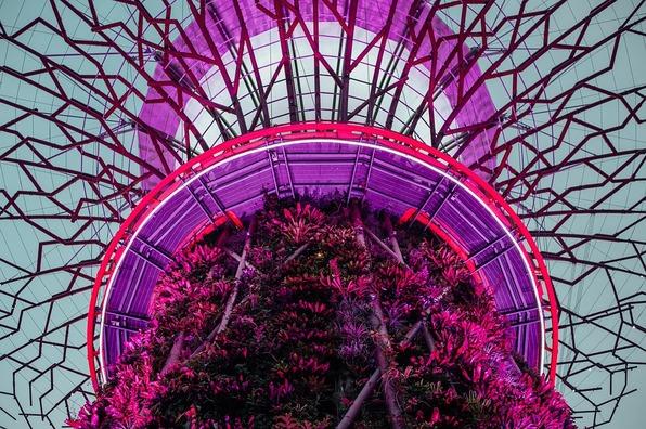 violet-2590844_960_720