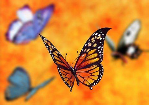 butterfly-1073160__340