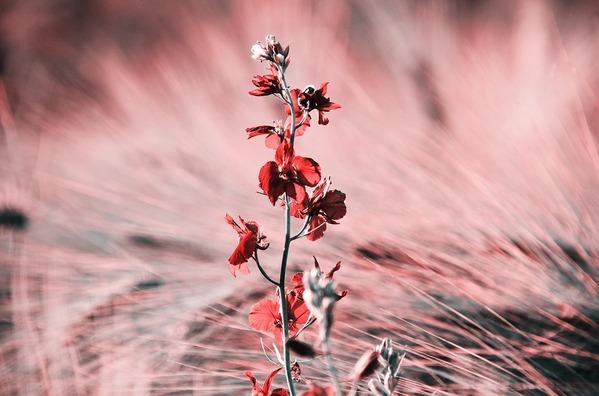 flower-4252294_960_720