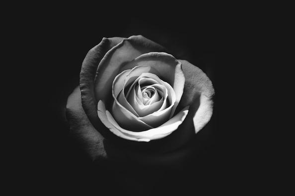 rose-1245972_960_720