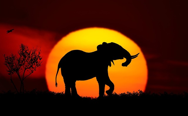 sunset-4209085_960_720