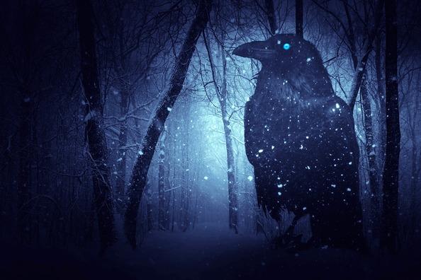 raven-2224697_960_720