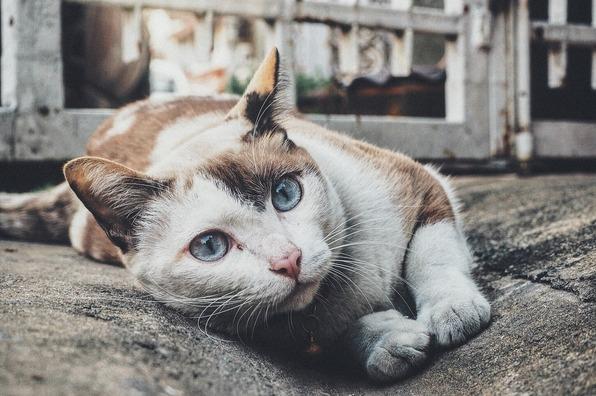 cat-1209067_1920