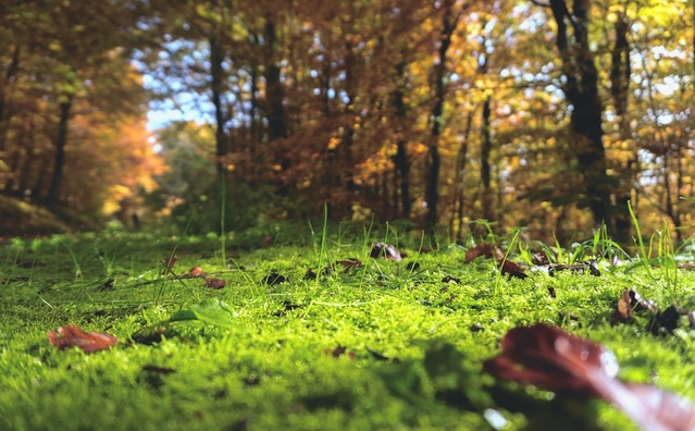 forest-floor-1031143_960_720