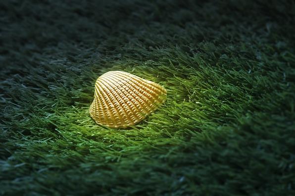 sea-shell-2815521_960_720