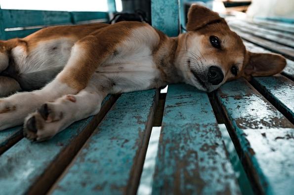 puppy-1149426_960_720