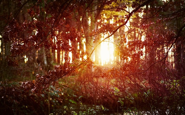 forest-3871380_960_720