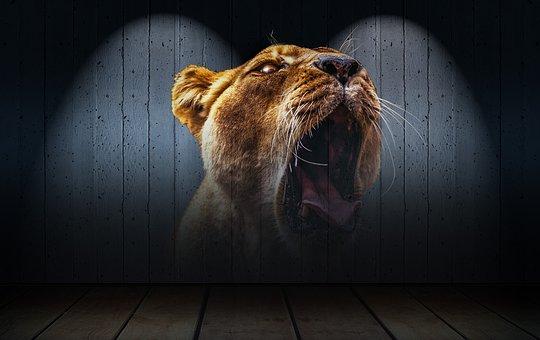 lion-2016163__340