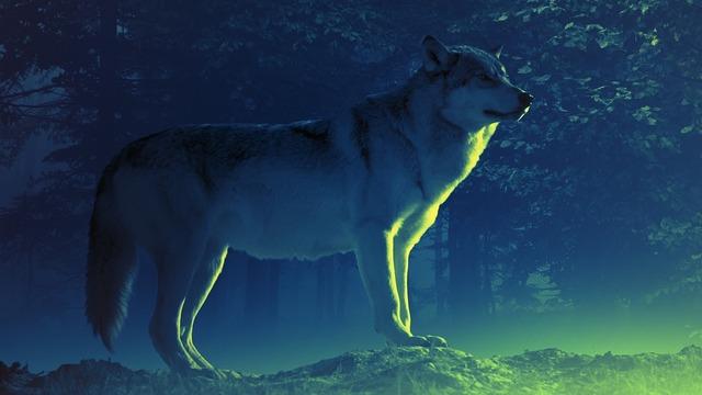 wolf-4477702_960_720