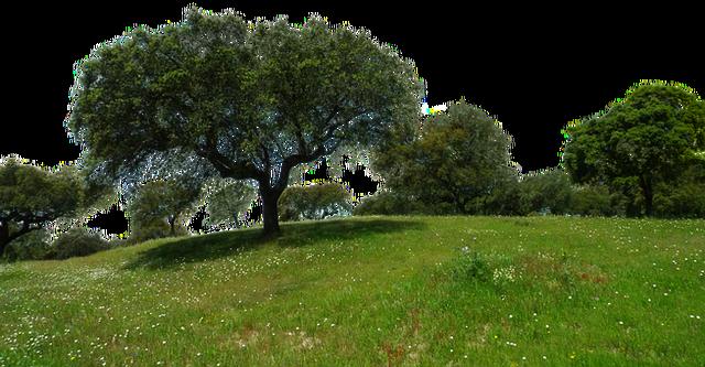 meadow-2287302__340