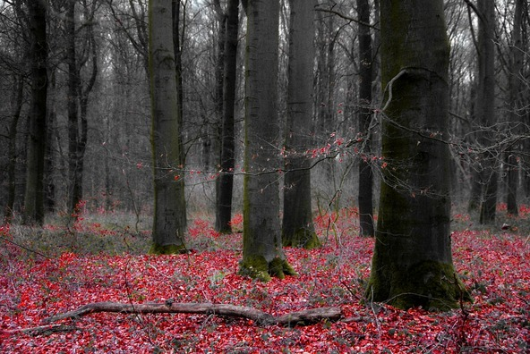 forest-982443_960_720