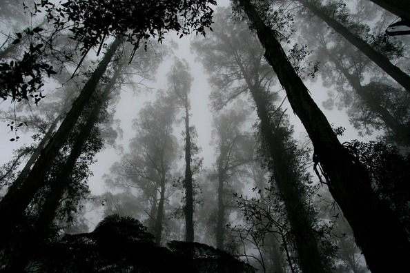 forest-1030832_960_720