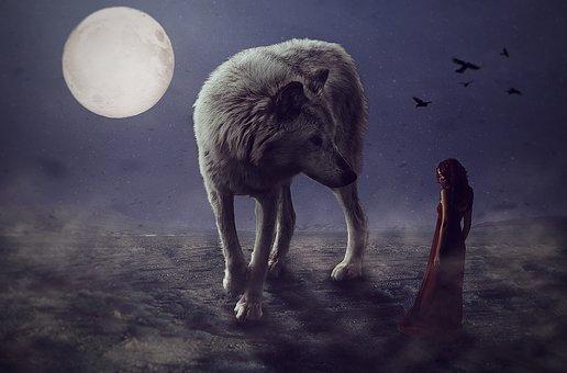 wolf-3033479__340