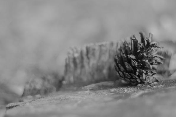 stump-1683110_960_720