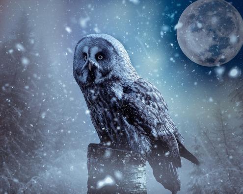owl-4148446_960_720