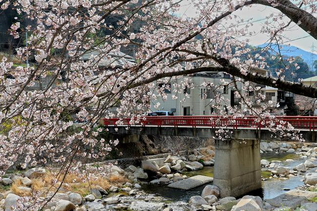 12桜�IMG_4538