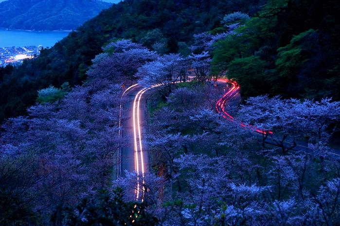 野呂山 夜の姥桜  野呂山の桜 夜桜 前日の リベンジに 行きました もう完全に 姥桜です...