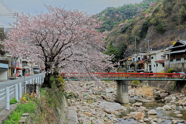 12桜�IMG_4549