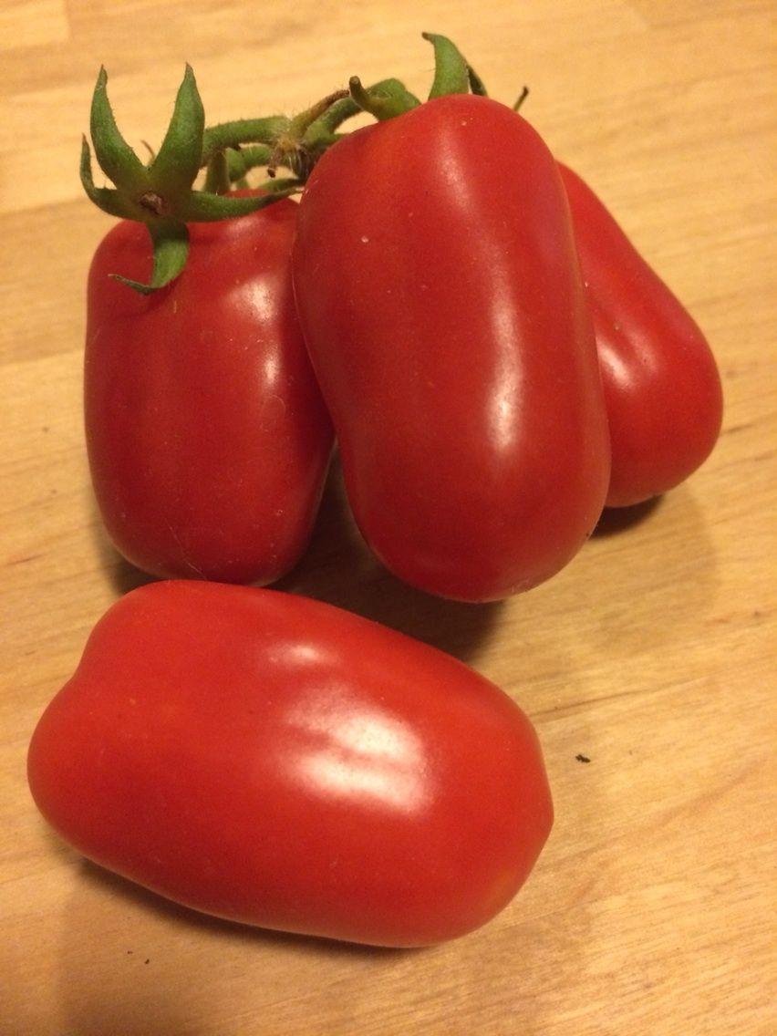 「サンマルツァーノ」 第一弾 収穫しました。。。 昨年は尻腐れ続発で不... サンマルツァーノ