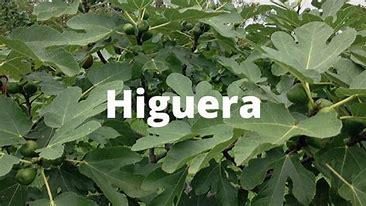 higuera1