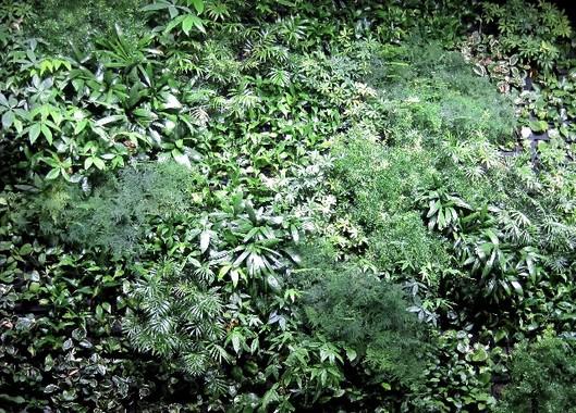 NOS ORG壁の森