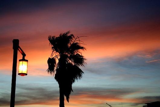 夕日 パームツリー