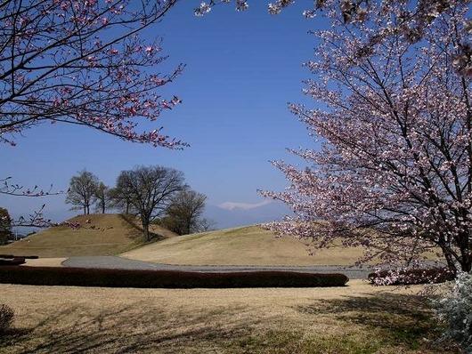 銚子塚と桜
