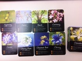 bachcards130611