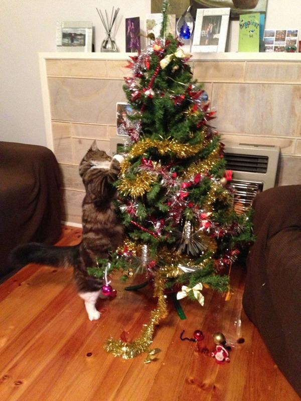 猫、あらぶる!クリスマスツリーに登る猫画像 (6)