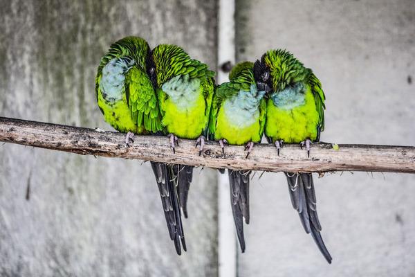 小鳥が温まる為に皆で寄り添っている可愛い画像 (23)
