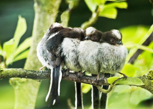 小鳥が温まる為に皆で寄り添っている可愛い画像 (18)