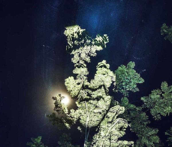 アマゾンの森に投影されたブラジル先住民スルイ族 (2)