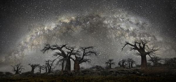 星空と古い木の美しい風景写真 2