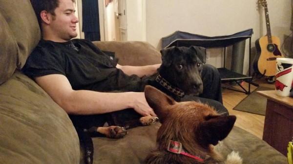 愛する家族となった犬